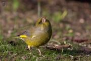 gruenfink 07
