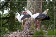 storch06