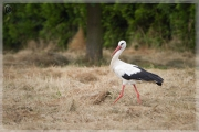 storch09