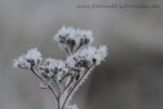 Winter 38
