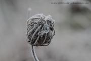 Winter 37