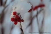 Winter 35